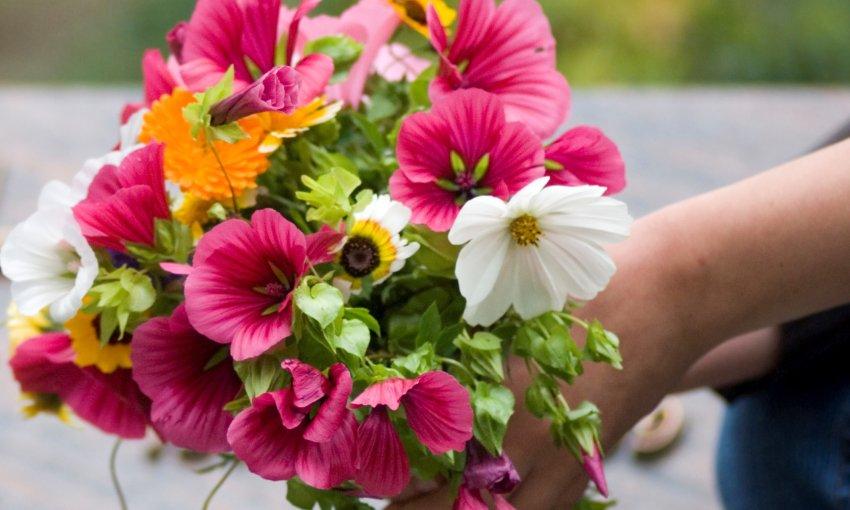 Blumenstrauß Pink Wir Haben Lob Von Kunden Gewonnen xl